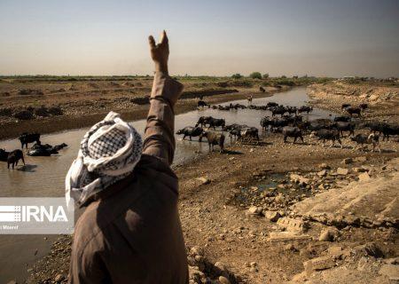 تامین ۶۰۰ تن خوراک دام رایگان برای دامداران دشت آزادگان