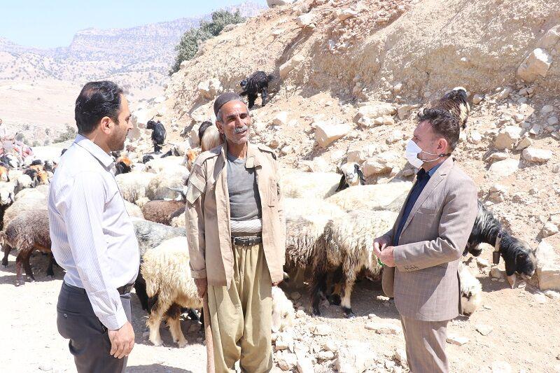 کوچ عشایر خوزستان به سمت مناطق گرمسیری آغاز شد